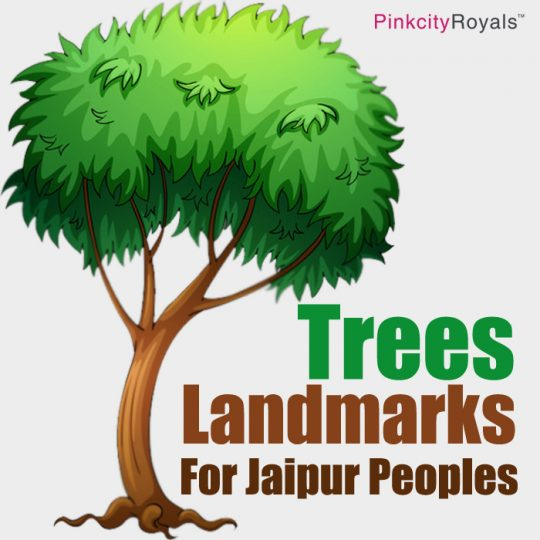 Trees : Landmarks For Jaipur Peoples